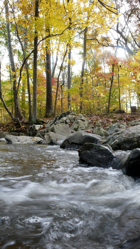 Suối rừng Virginia