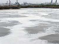 Thị Vải bị ô nhiễm. TTO.