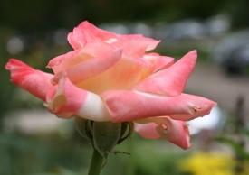 Chúc mừng năm mới 2011 « Hiệu Minh Blog