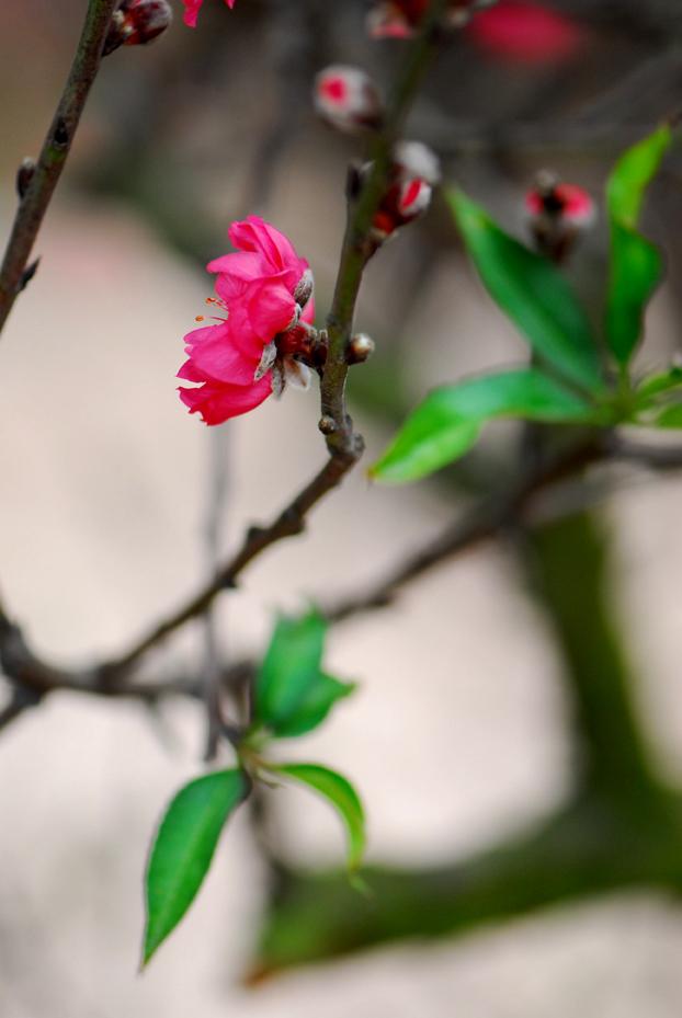 Tuyển tập những bài hát hay nhất về mùa xuân