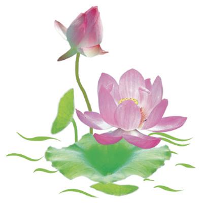 http://hieuminh.files.wordpress.com/2011/01/hoa-sen.jpeg