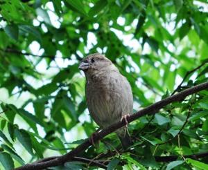 Chim sẻ cạnh cửa sổ Cua Times. Ảnh: HM.