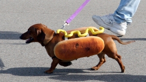 Hot - Dog :) Ảnh: internet