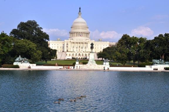 Đàn vịt trước Capitol Hill. Ảnh: HM