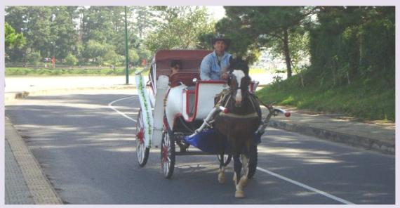 Xe ngựa chở khách. Ảnh: Dove