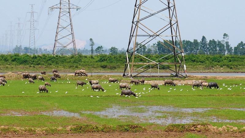 Xóm Tụ An ven sông Hoàng Long ngày nay. đã có điện. Ảnh: HM