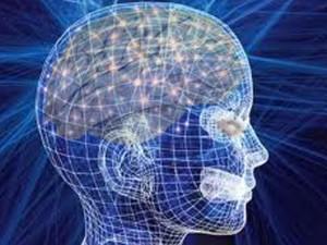 Bộ não người.