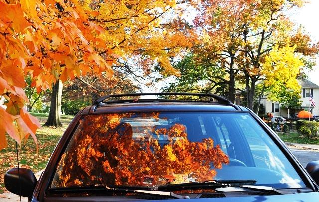 Lá vàng trong xe hơi. Ảnh; HM