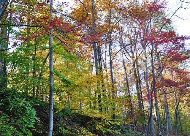 Rừng Great Fall. Ảnh: HM