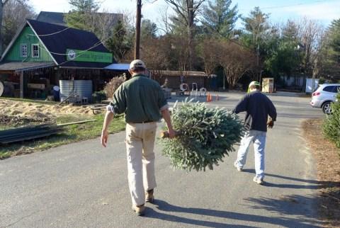 """Hai bác nông dân đưa cây đi """"đóng gói"""". Ảnh: HM"""