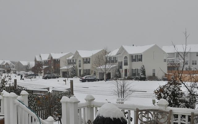 Leesburg Snow. Ảnh: HM