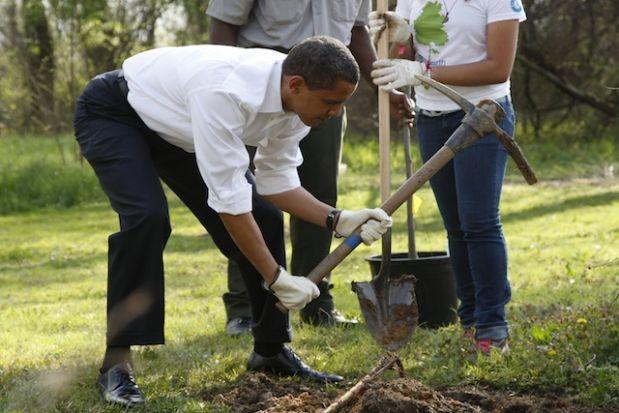 Barack Obama trồng cây ở Kenilworth Aquatic Gardens in Washington. Cái này tạm được dù dài lưng tốn vải