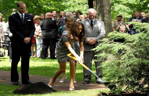 Kate - vợ của Hoàng tử William đang trồng cây ở Rideau Hall - Ottawa - Canada