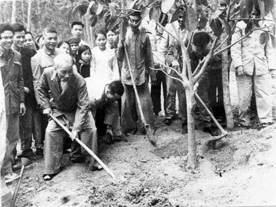 Cụ Hồ trồng cây đa ở Vật Lại - Ba vì - Hà Tây 1969. Ảnh tư liệu