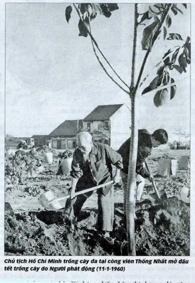 Cụ Hồ trồng cây đa ở công viên Thống nhất năm 1960. Ảnh: tư liệu