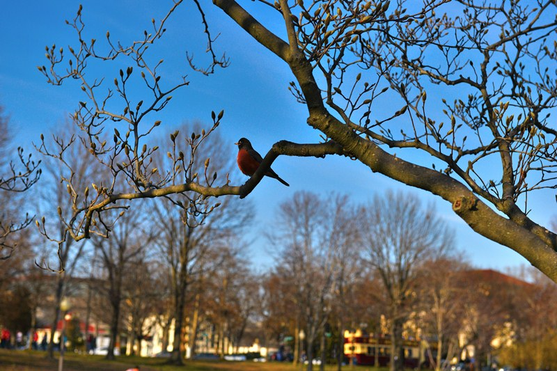 Chim mùa xuân. Ảnh: HM