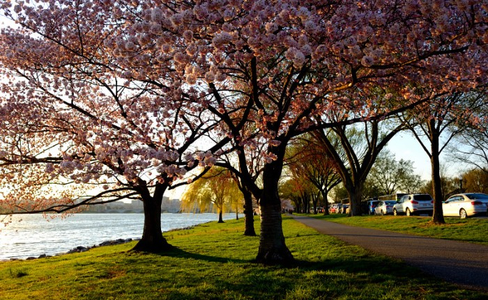 Bên bờ sông Potomac. Ảnh: HM