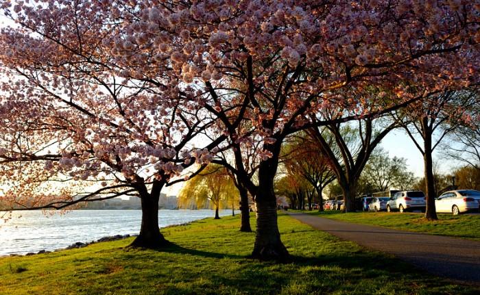 Bên bờ Potomac. Ảnh: HM