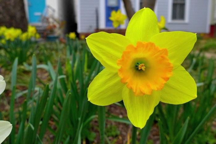 Và hoa này nữa tặng cháu Trâm. Ảnh: HM