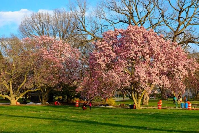 Vườn hoa trong khuôn viên Capitol Hill. Ảnh: HM