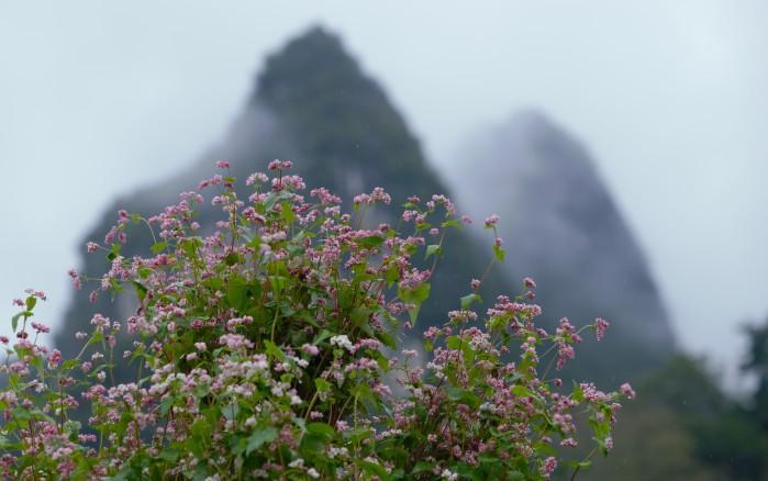 Vẻ đẹp của núi rừng. Ảnh: HM